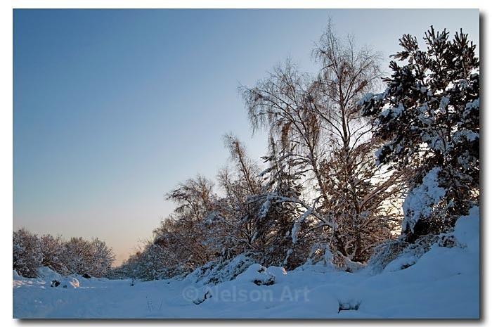 Winter Wonderland - Scapes