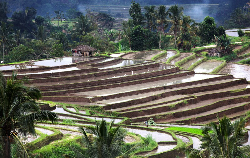 Work the Land - Bali's Lush Heartland
