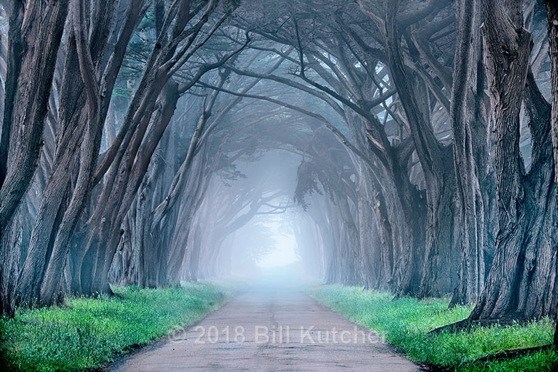 Point Reyes Tree Tunnel - Current Show