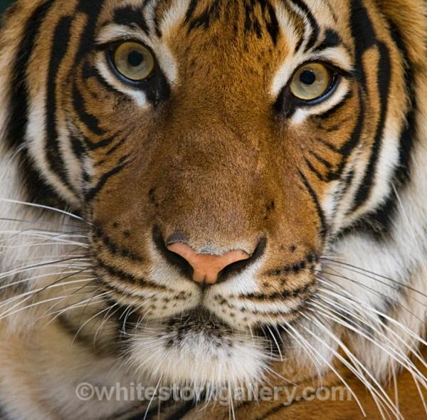 Bright Eyes - Wildlife and Animals