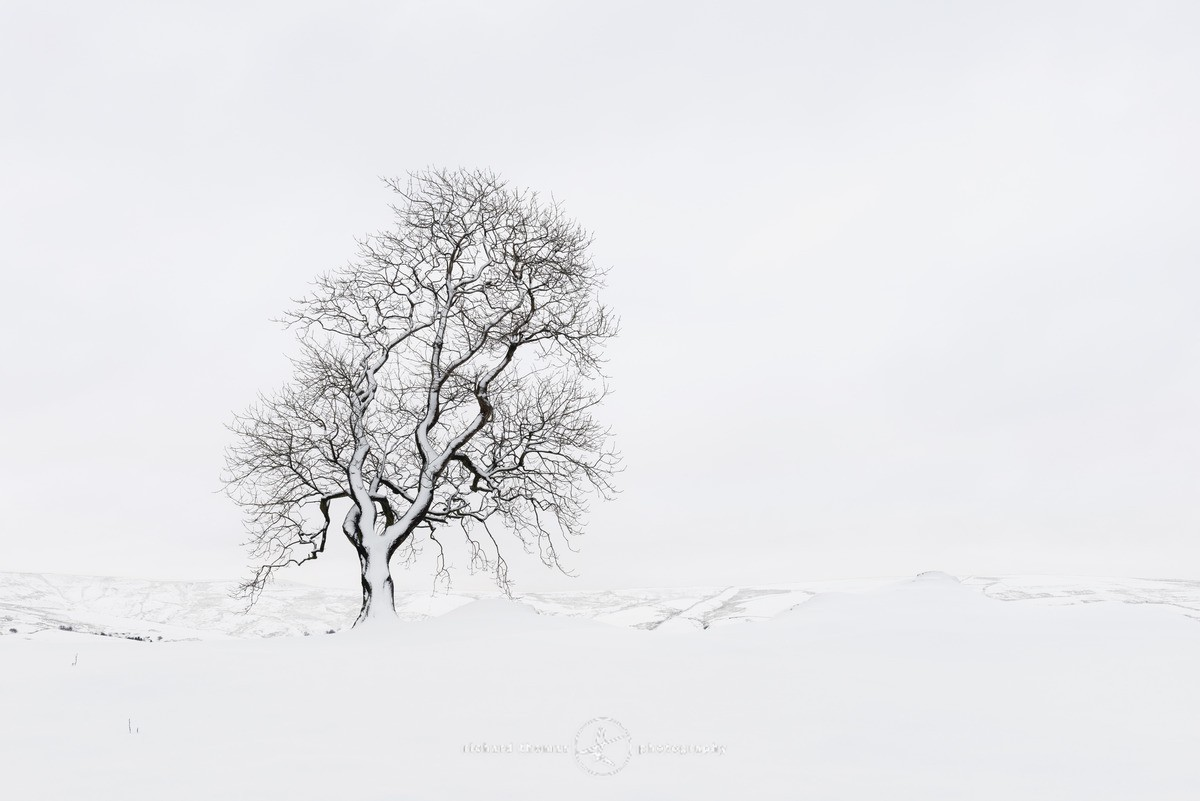 Snow ridge tree - WINTER