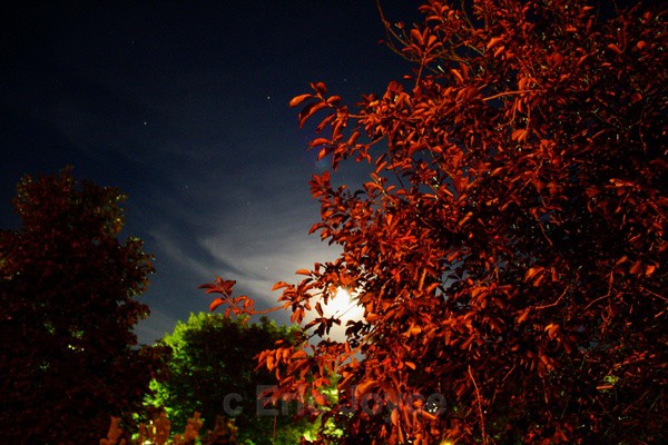 Moonlit Night - SW Minnesota