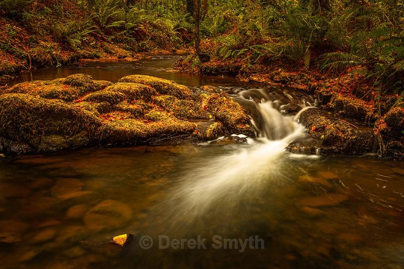 Autumn Pine Needles - Co. Armagh