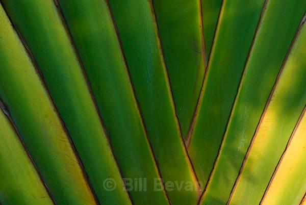Palm Weave - Linear