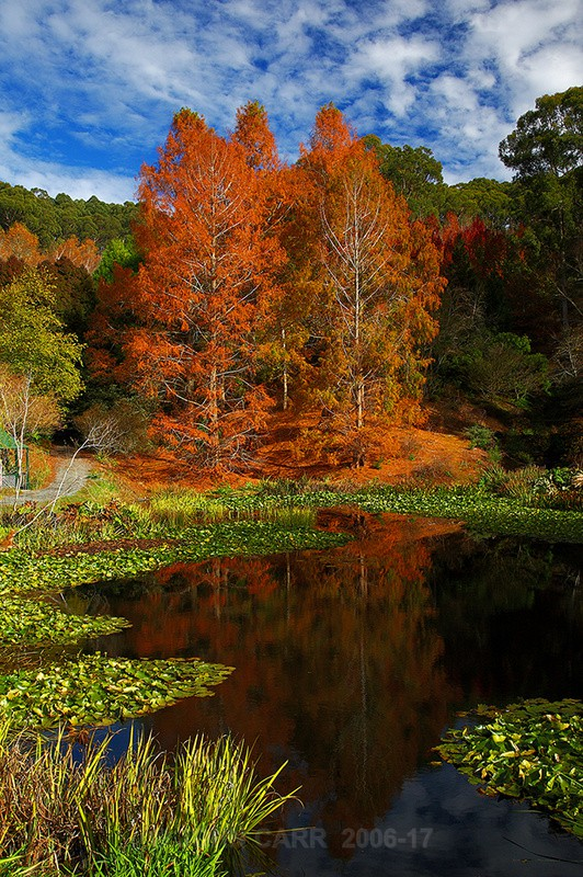 Mt Lofty Autumn Reflections-5731 - TREES, FLOWERS AND PLANT PHOTOS