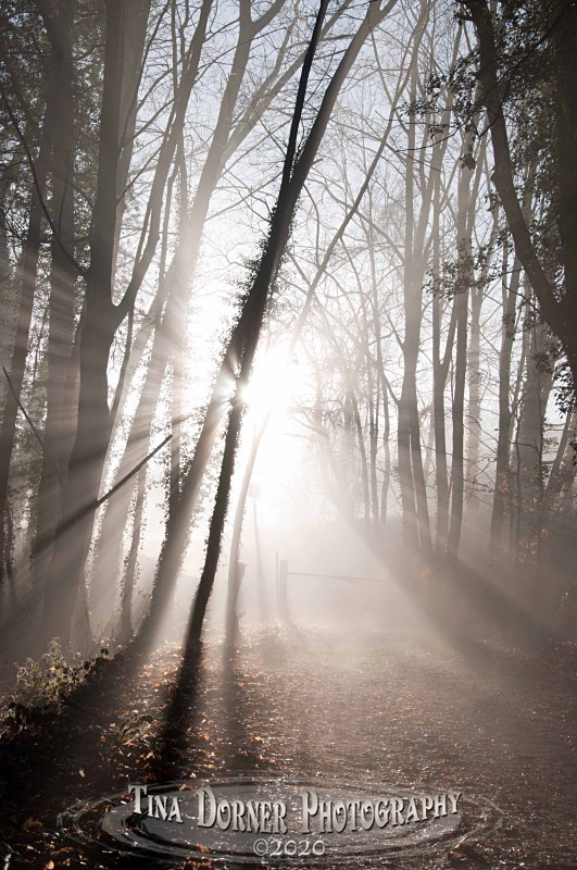 Bright Morning sun through mist. Winter Landscape portfolio by Tina Dorner Photography,  Forest of Dean and Wye Valley, Gloucestershire