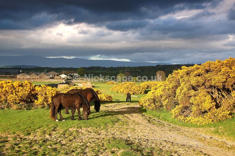 Cumbria3 - Askham Horses - Lake District National Park