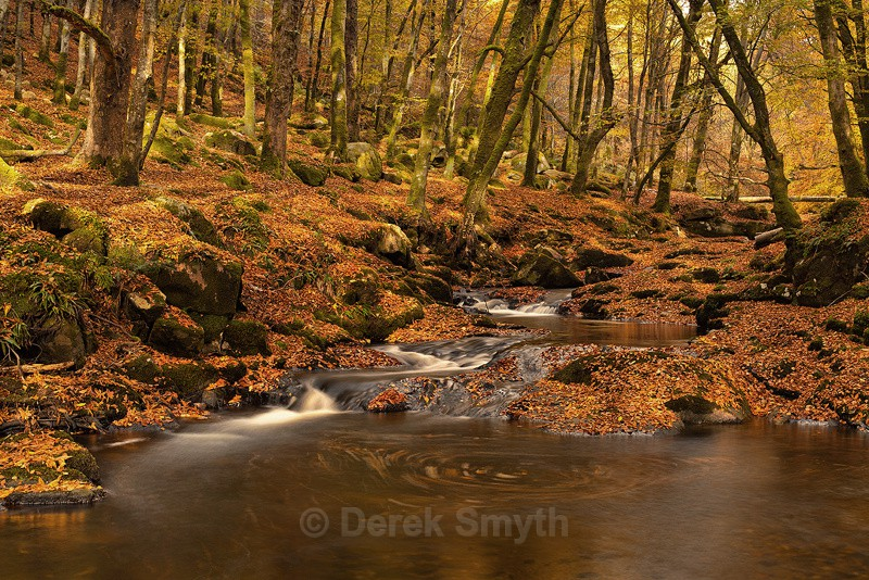 Autumn Woodland landscape Photograph