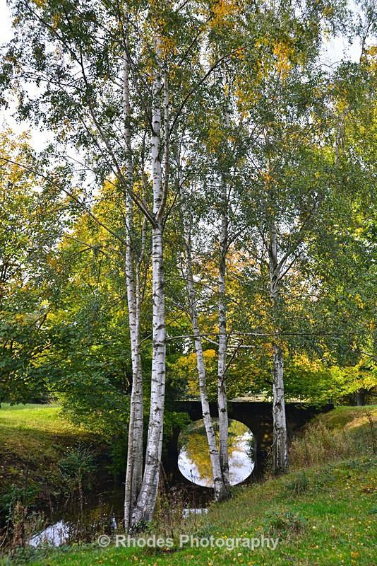 Silver Birches (portrait) - Yorkshire Sculpture Park - Landscape Shop