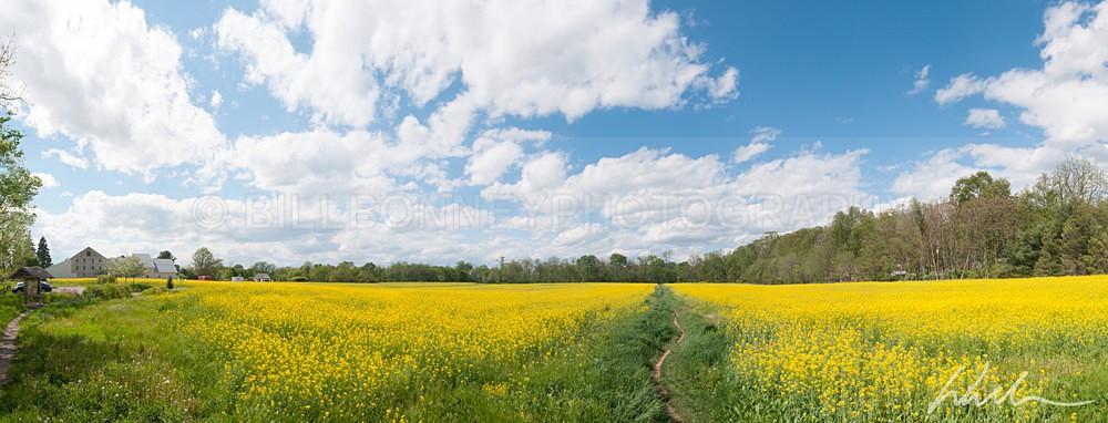 _WDB6257-Pano - Landscapes...