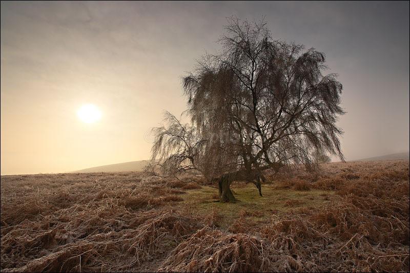 Winters Sun - Peak District Winter