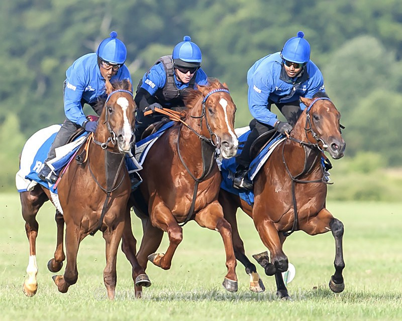 - Newmarket. Horses in Training