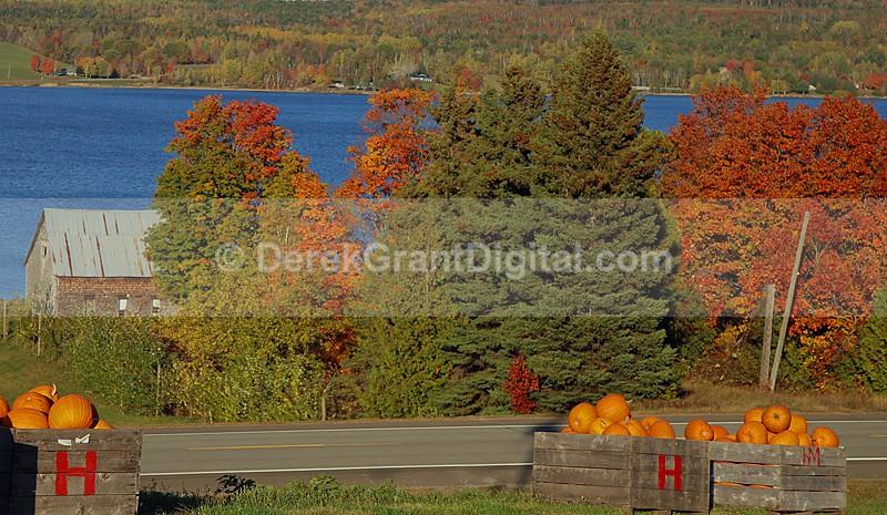 Autumn Festival Pumpkins for Sale - New Brunswick Canada - Autumn Festival