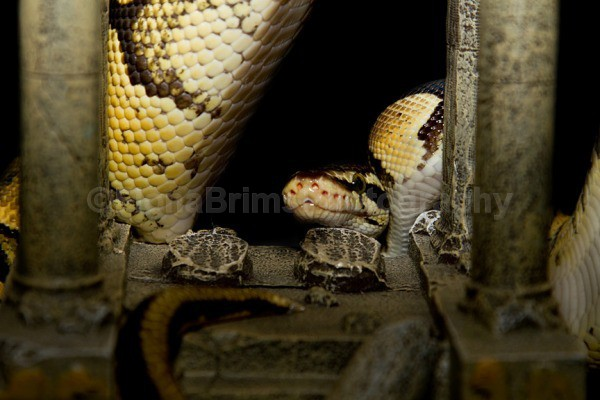 clyde 3 - Reptile Photography