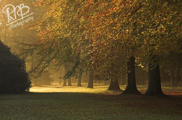 Autumn Light - Wiltshire & West Country Landscapes