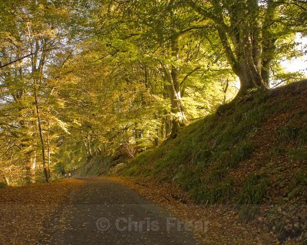 Autumn Lane - Traditional Landscapes