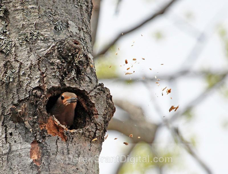 Spring Cleaning - Birds of Atlantic Canada