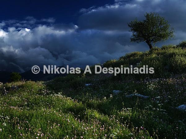 Arcadian Alifira I Αρκαδική Αλίφειρα - Νότια Ελλάδα I South Greece