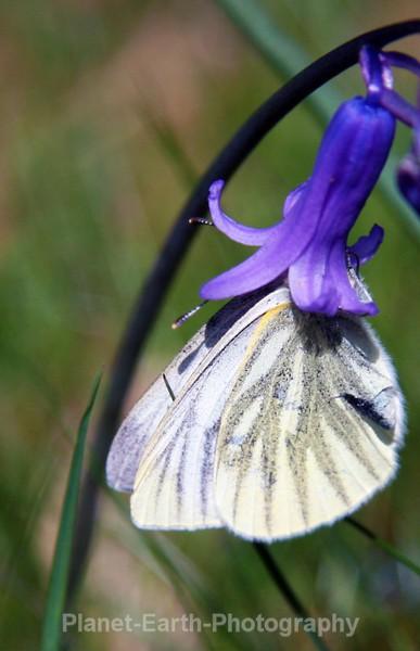 - Flora and Fauna