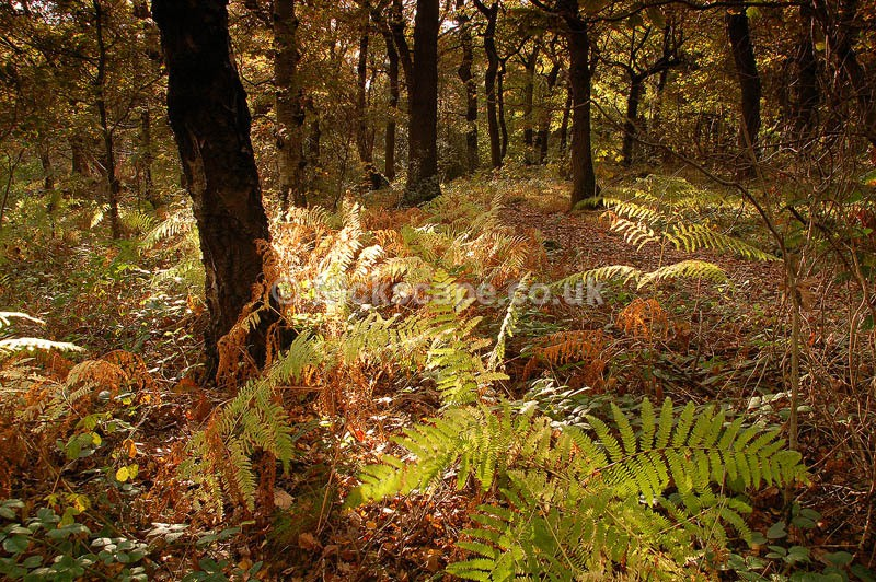 Hagg Wood in Autumn | Brockholes | Yorkshire Photography Gallery