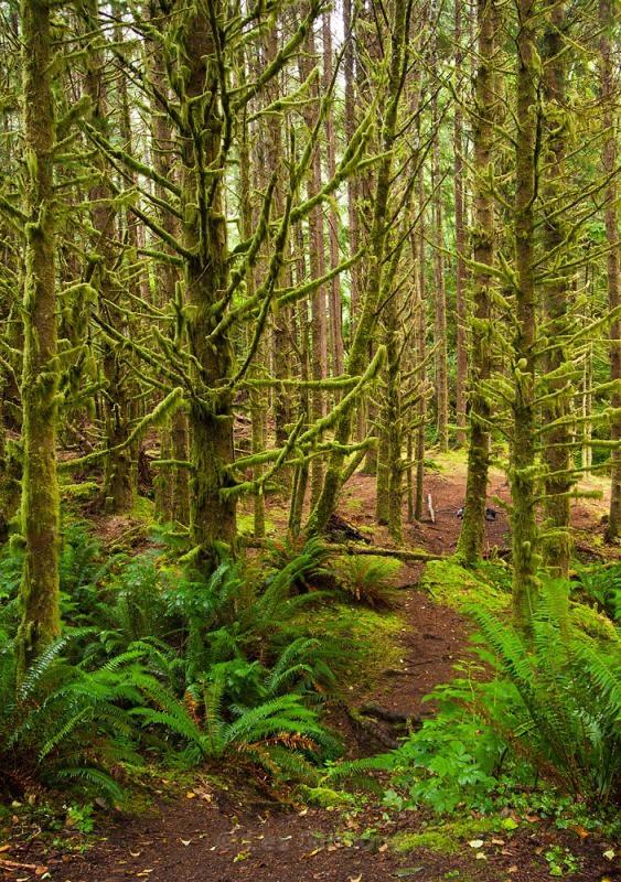 Cummins Creek forest - Oregon