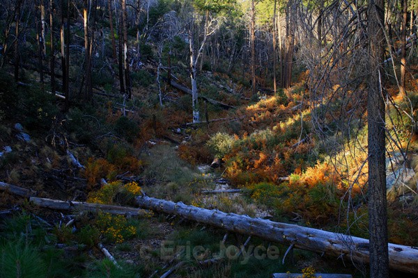 Autumn in the Catalinas - Tuscon, Arizona