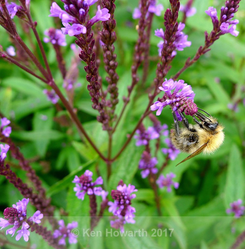 A busy bee - Natural World