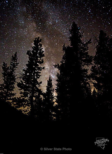 Looking thru the Pines #2 - Night Photography