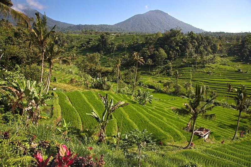 Jatihluwih - Bali's Lush Heartland