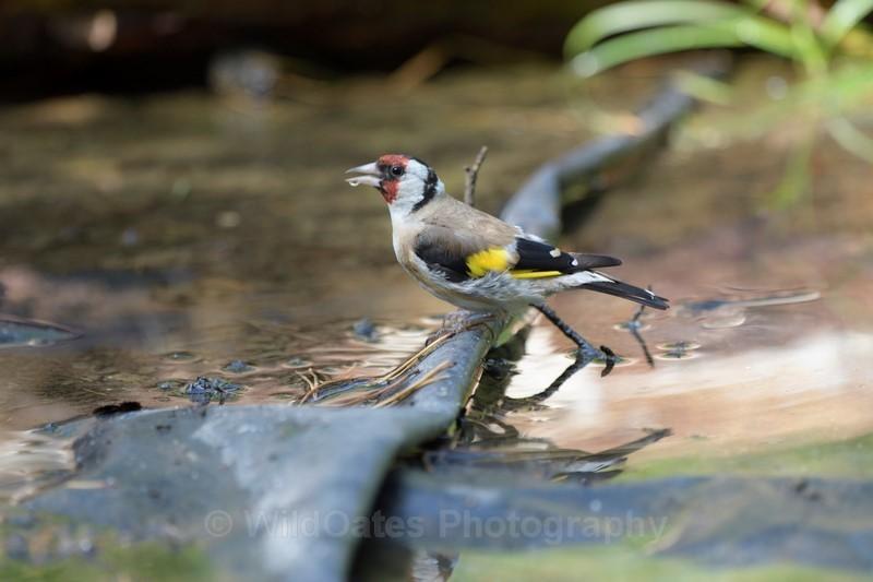 2017-11-07-19-48-02 NIKON D500 500mm f 45  1-400 iso400 - Birds