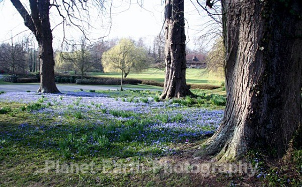Bluebell Carpet - Changing Seasons