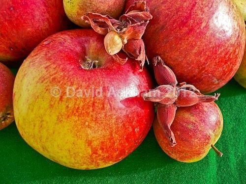Harvest fruit - Autumn