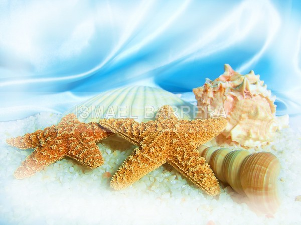 Beach shells - Life Stills