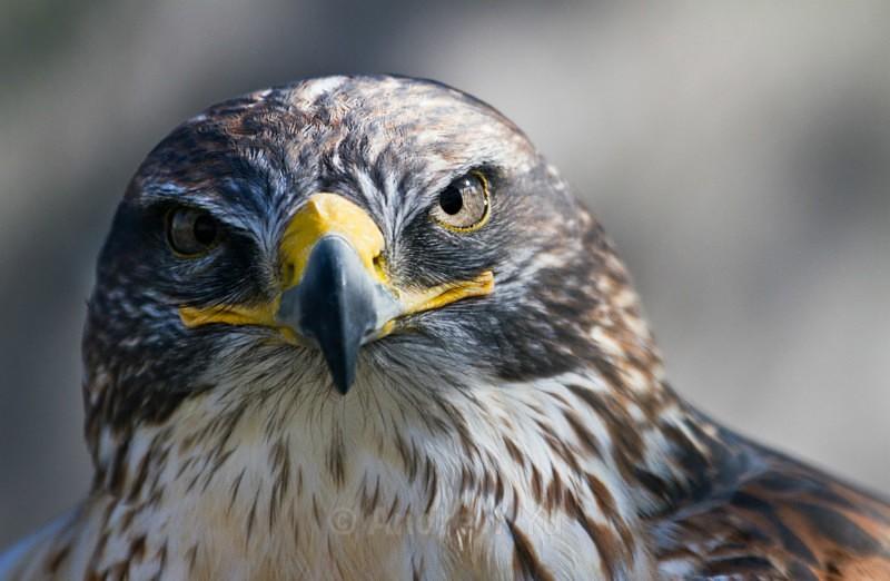 Eyeballing - Wildlife and Nature Photography