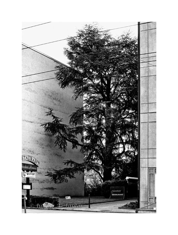 Geneva rue de St Jean