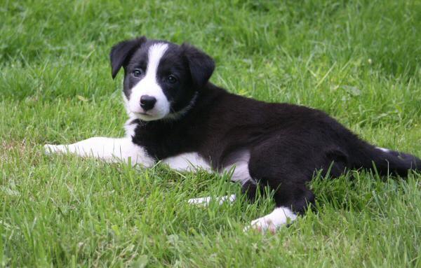 11 Seven weeks old - SASHA