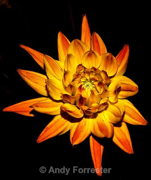 Fire Flower - Low Light Flowers
