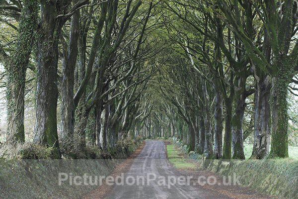 The Avenue, Bridestowe - Devon and Dartmoor