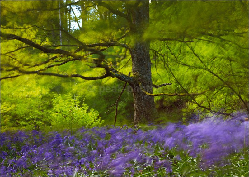 Bluebell Blur - Photographs of Woodland & Rivers