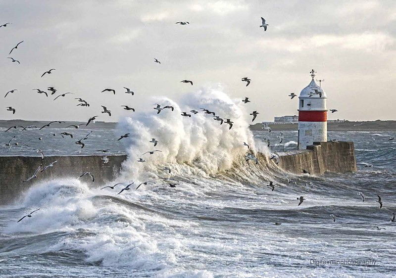 Gulls in the Spray - Latest additions