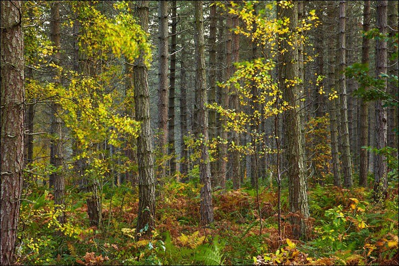 Changing Seasons - Photographs of Woodland & Rivers