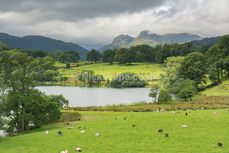 Summer at Loughrigg Tarn - Langdale Pikes -Lake District National Park - Latest Photos