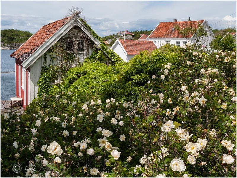Ulvøysund 20110625-IMG_3041 - Agder