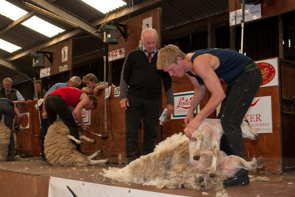 33 - Shearing Competition