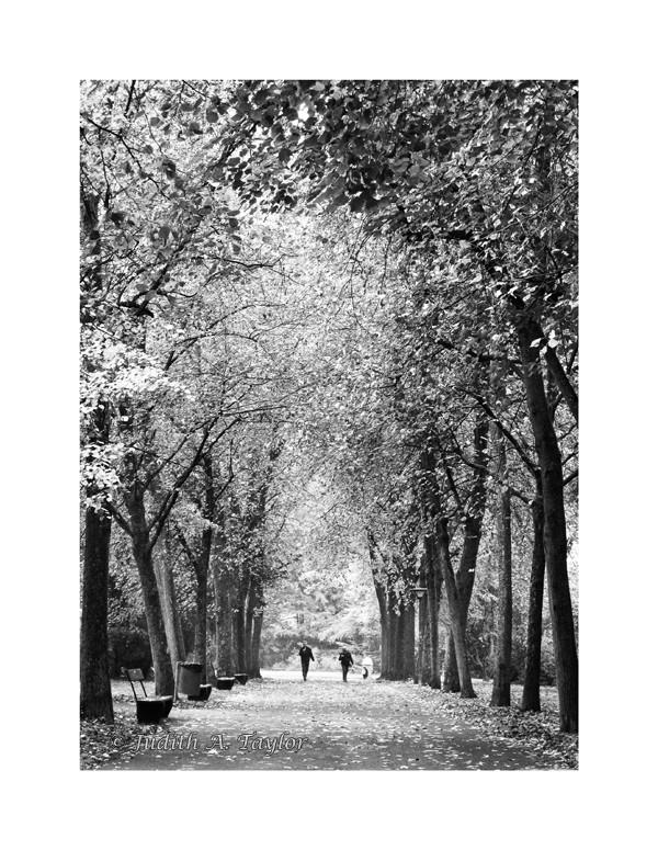 Geneva parc Bertrand