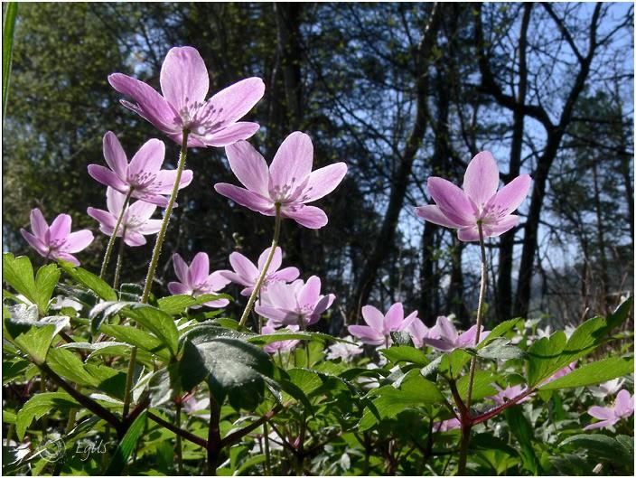 20060506-P1000398 - Flora