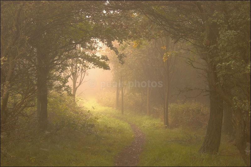 Enchanted Woods - Photographs of Woodland & Rivers