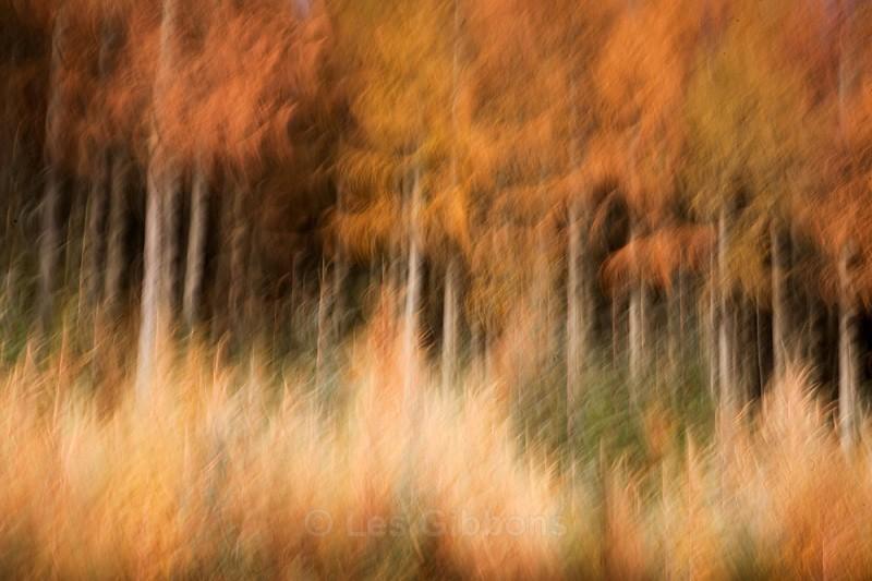 autumn dreamscape - Perthshire