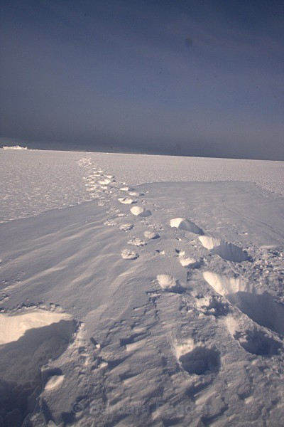 Polarbear tracks 2991 - Winter in the daylight