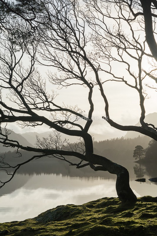 Brandelhow Park - Lake District Tree Photorgaphy